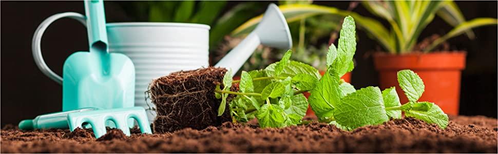 jardinage plante